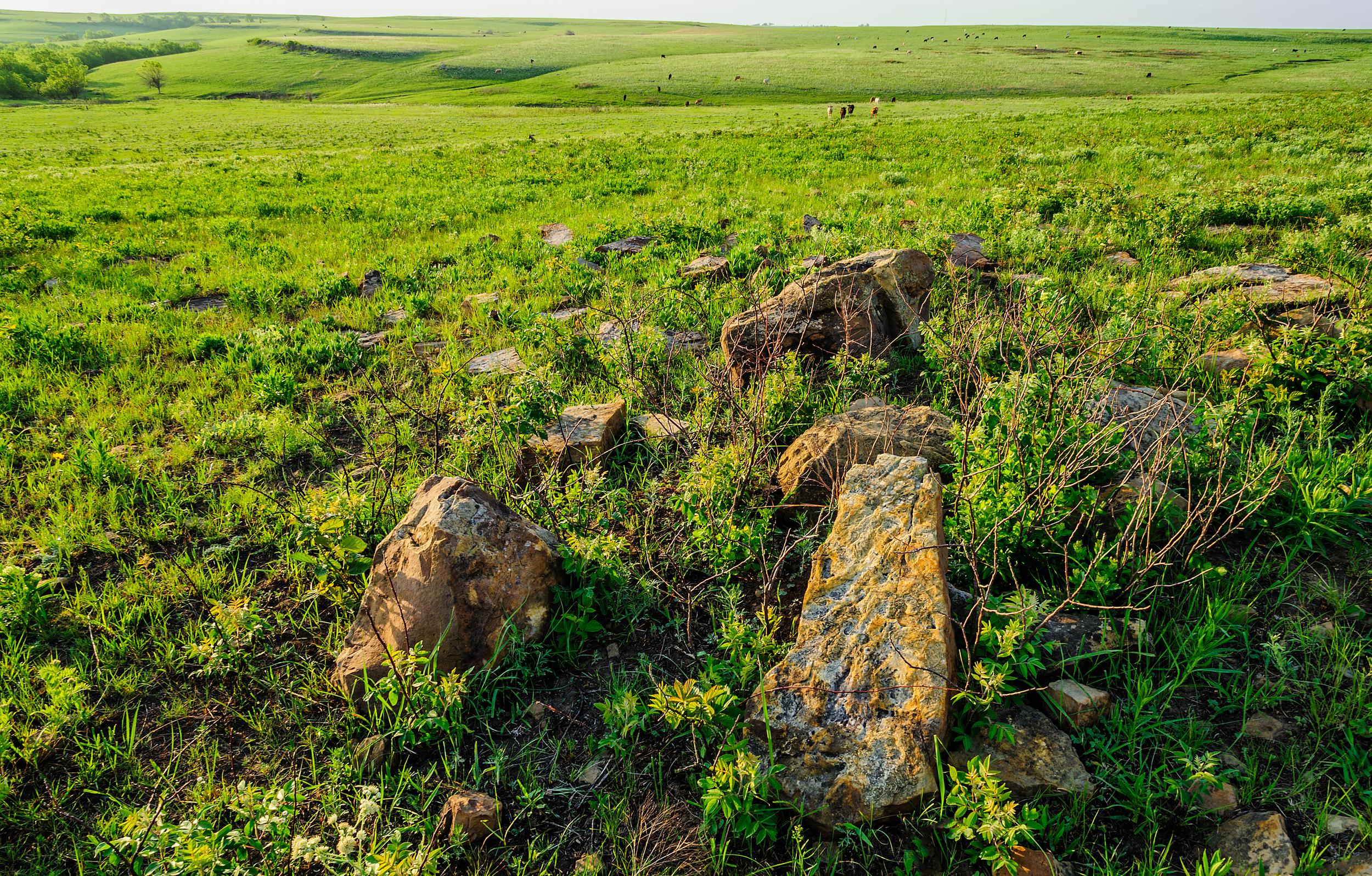 Red Buffals_Hogle__DSC6826.jpg