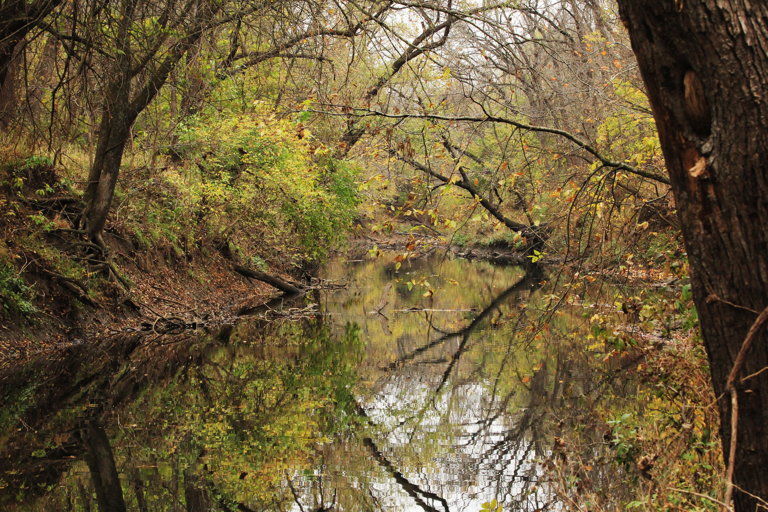 The Blue River runs through the Kansas Land Trust's Blair conservation easement in southern Johnson County.