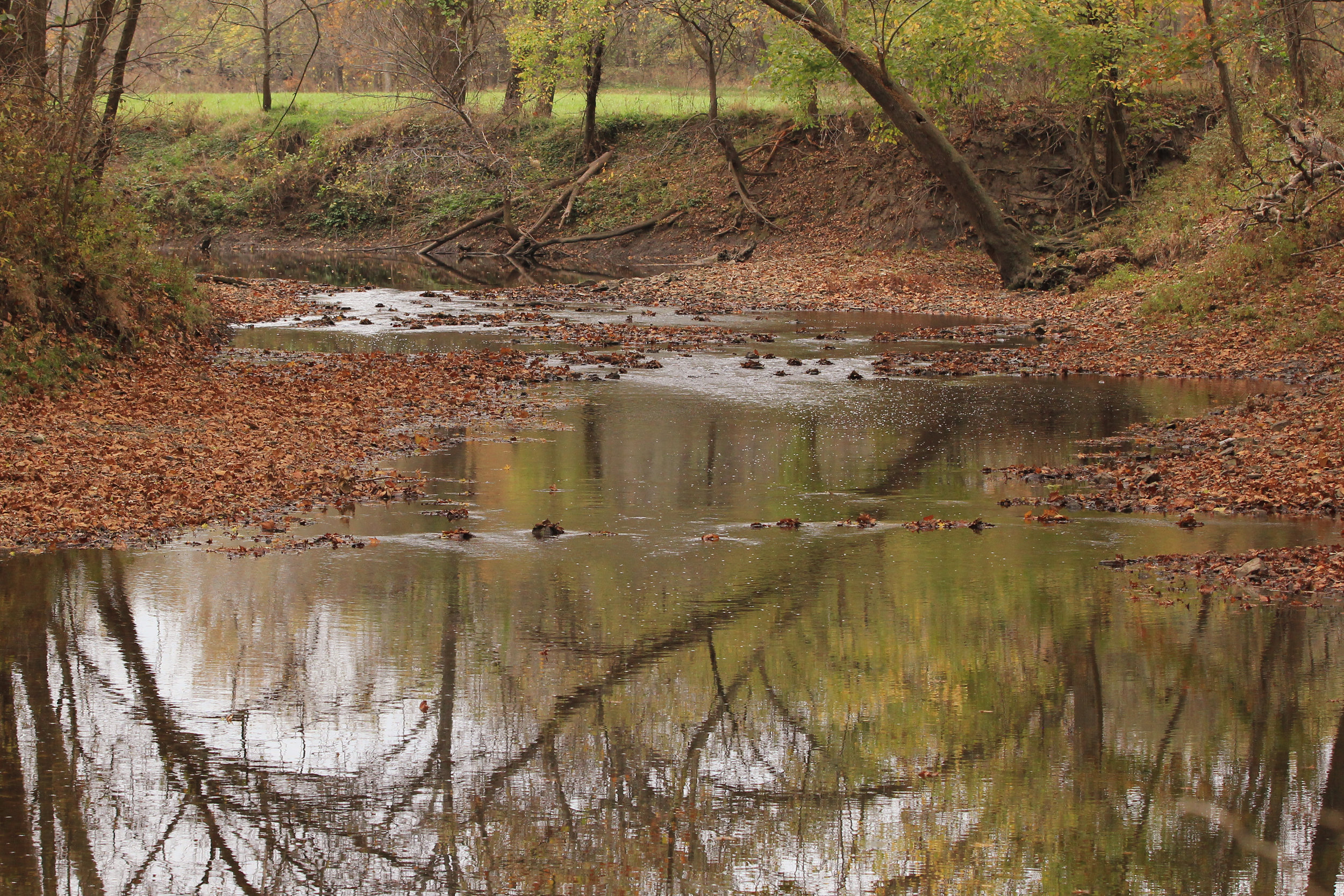 A section of the Blue River running through the Kansas Land Trust's Stueck conservation easement in southern Johnson County.