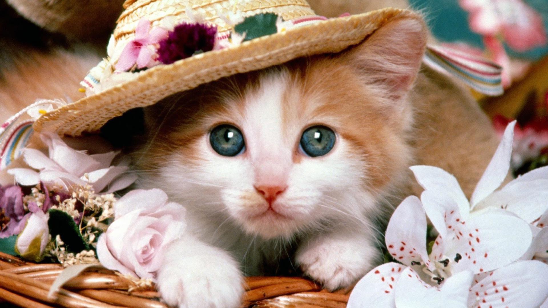 adorable-cat.jpg