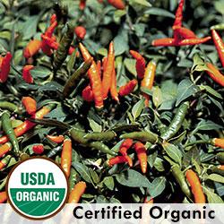 Thai Orange Organic Pepper