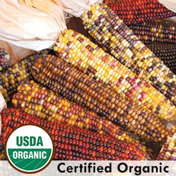 Smoke Signals Organic Corn