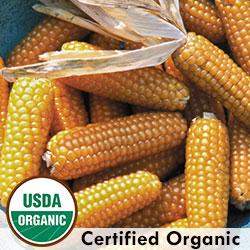 Tom Thumb Organic Corn