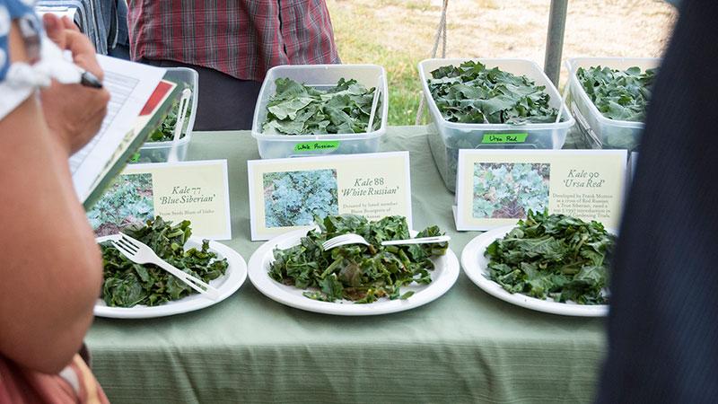 Evaluating Kale