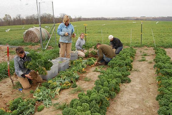 Our Garden Team Prepares Biennials for Overwintering