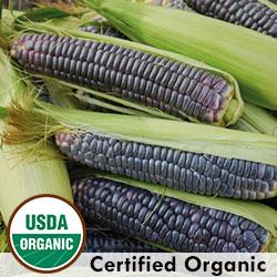 Blue Jade Organic Corn