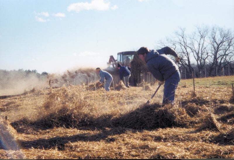Garlic Mulching