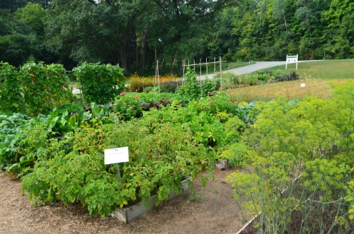 Raised beds in the Diversity Garden at Heritage Farm.