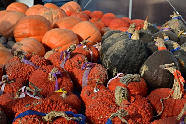 Growing squash can provide healthy food through spring if stored properly over the winter.