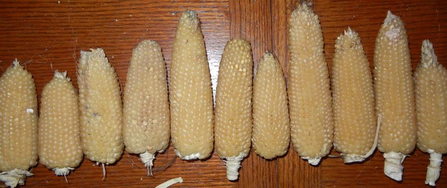 Landkammer Popcorn, courtesy of Tim Ryan