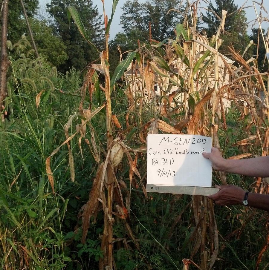 Landkammer Popcorn, courtesy of Dorene Paskeroff