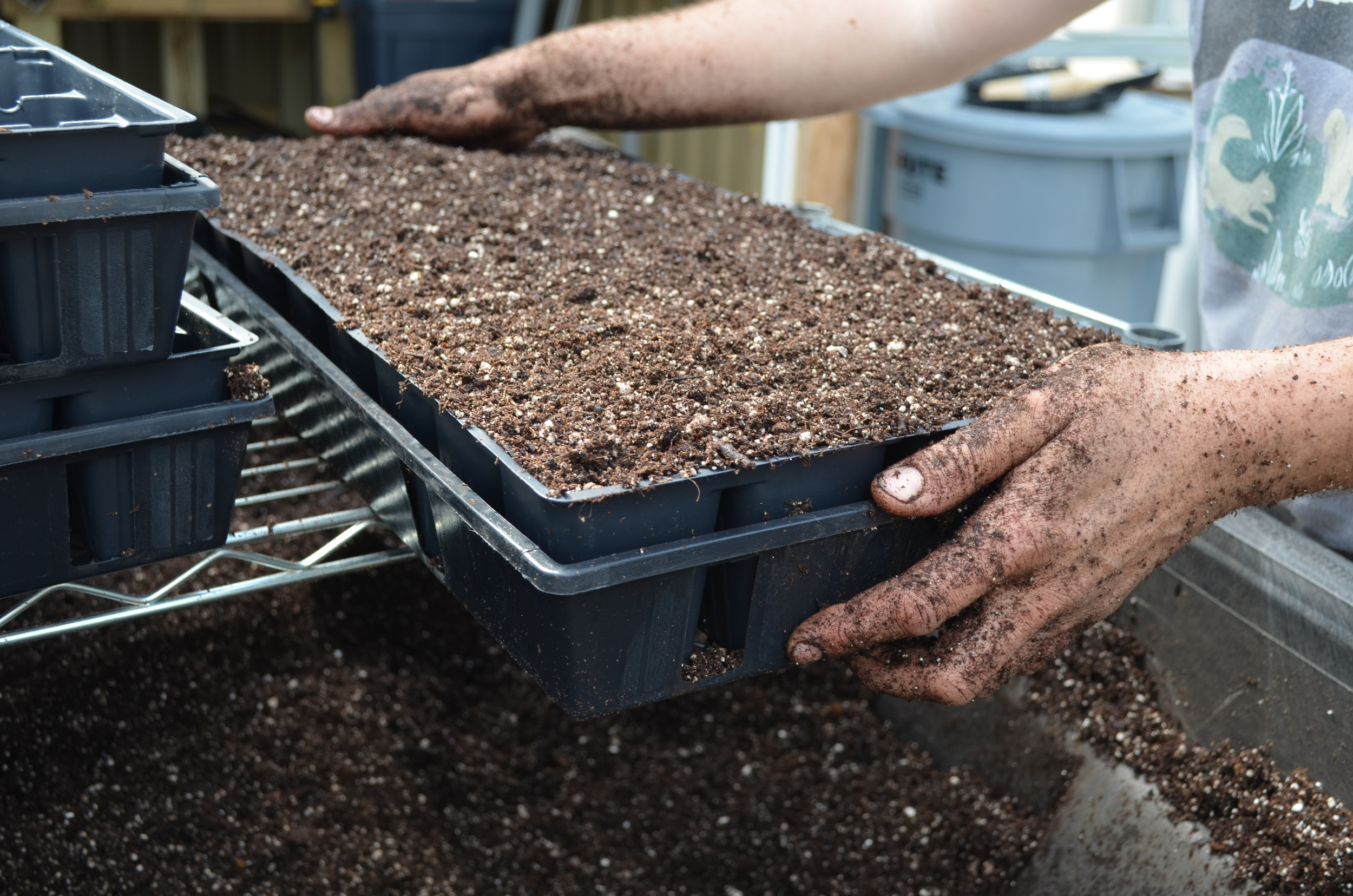 Amy prepares soil for Bean Sowing