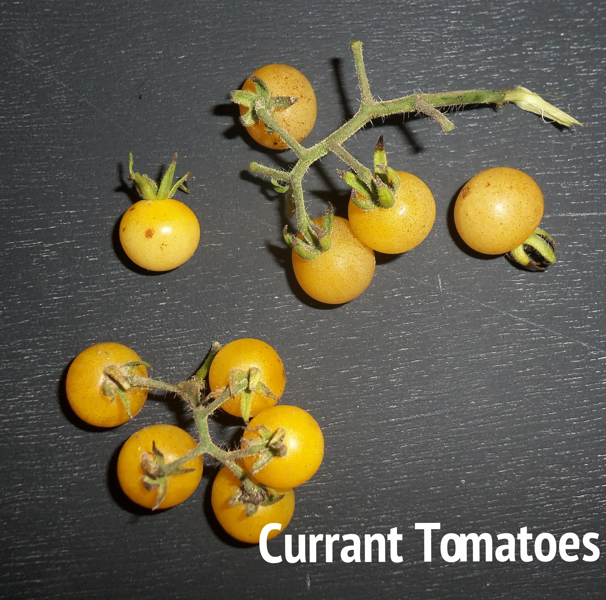 currant tomato.jpg