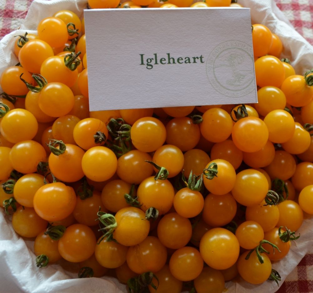 The Igleheart Yellow Cherry Tomato is part of Seed Savers Exchange's Collection of Heirloom and Historic seed varieties.