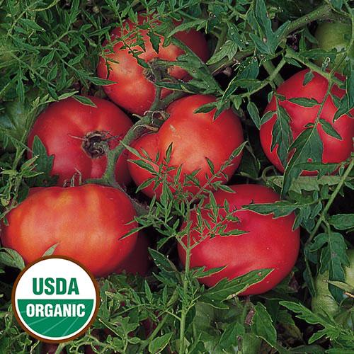 'Silvery Fir Tree' tomato