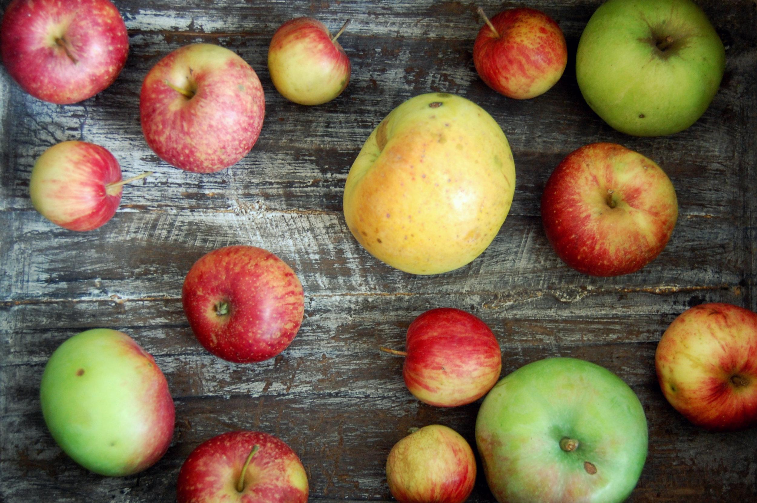 AppleBasket.jpg