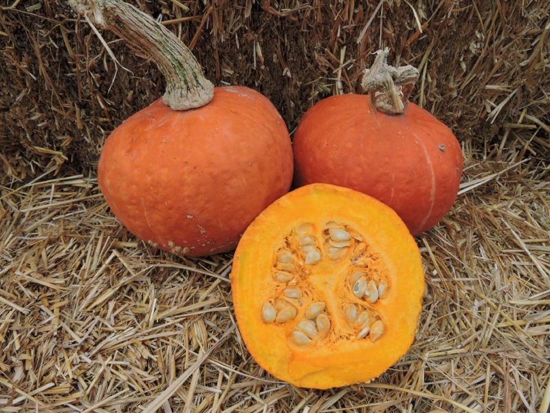 """Banquet produces flattened fruit measuring 6-8"""" long and 6-8"""" wide, weighing 3.5 to 6.5 pounds. It was the winner of our 2015 squash taste trials."""