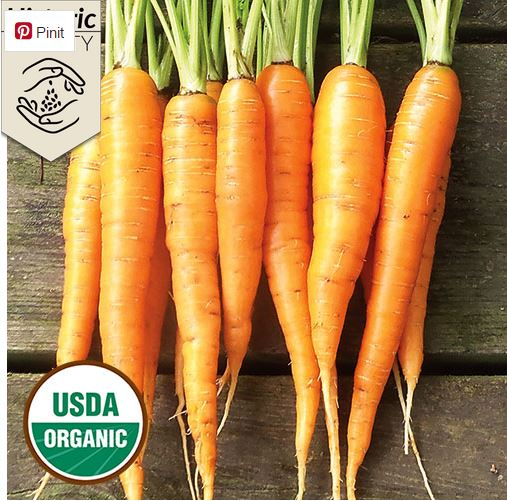 Delicious cooked or raw, the Red Surrey carrot is one of 13 exceptional varieties that make up the 2017 Heritage Farm Collection.