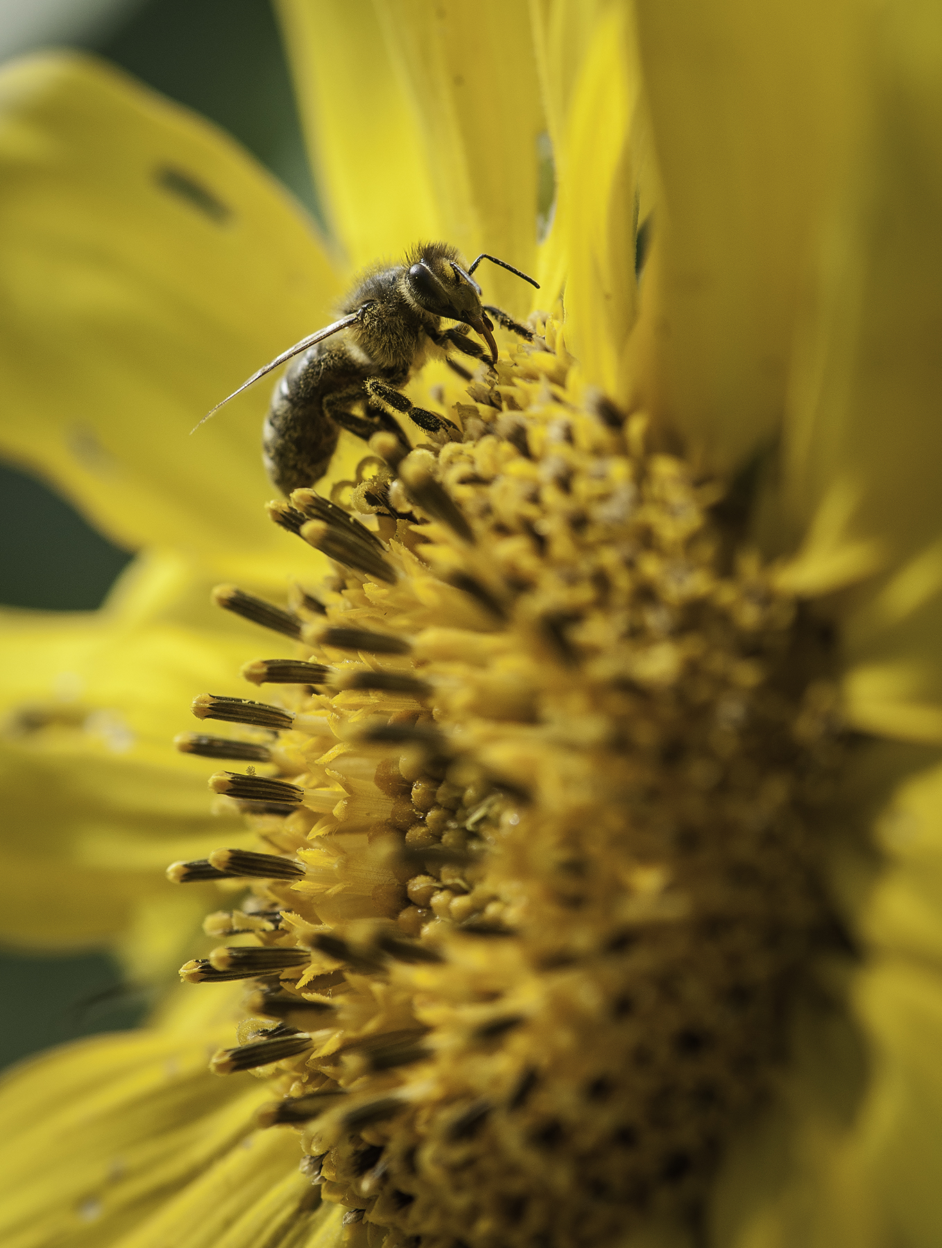 Help make bees and other pollinators feel at home in your garden by creating habitats in which they can nest.