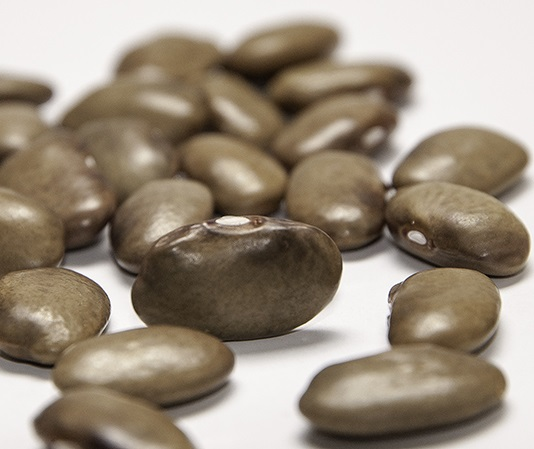 "Visit Seed Savers Exchange's online exhibit on John Withee (the ""BEAN MAN"") to LEarn More ABOUT Phil Appleby's ' Big Brown' bean ."