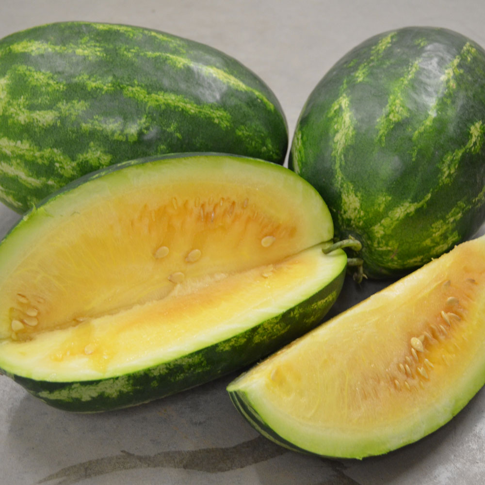 Borries Yellow Watermelon