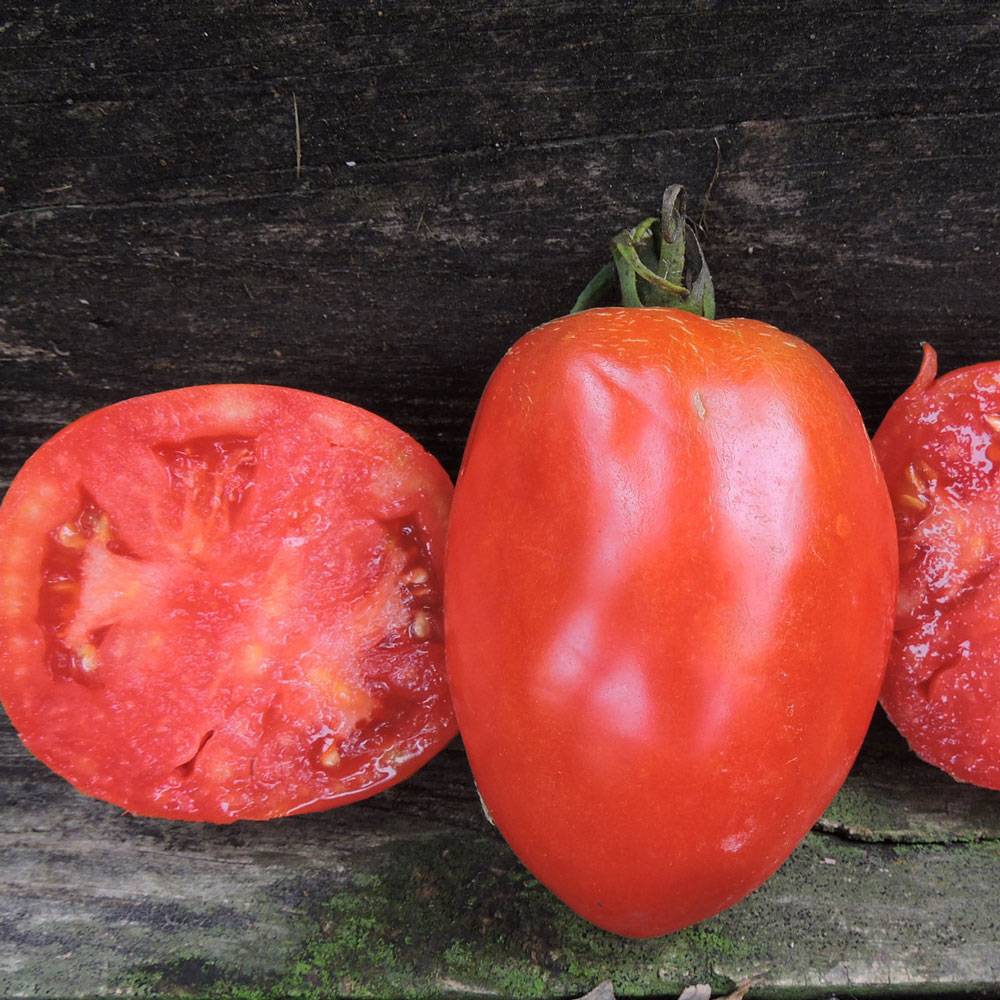Salvaterra's Select Tomato