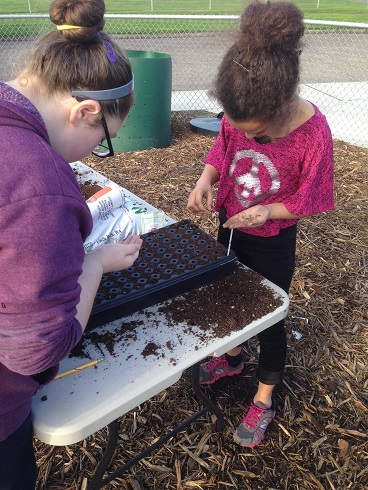 The next generation learns how to start seeds at Olympic Elementary School in Washington, through Lower Columbia  School Gardens and with the support of Seed Savers Exchange.