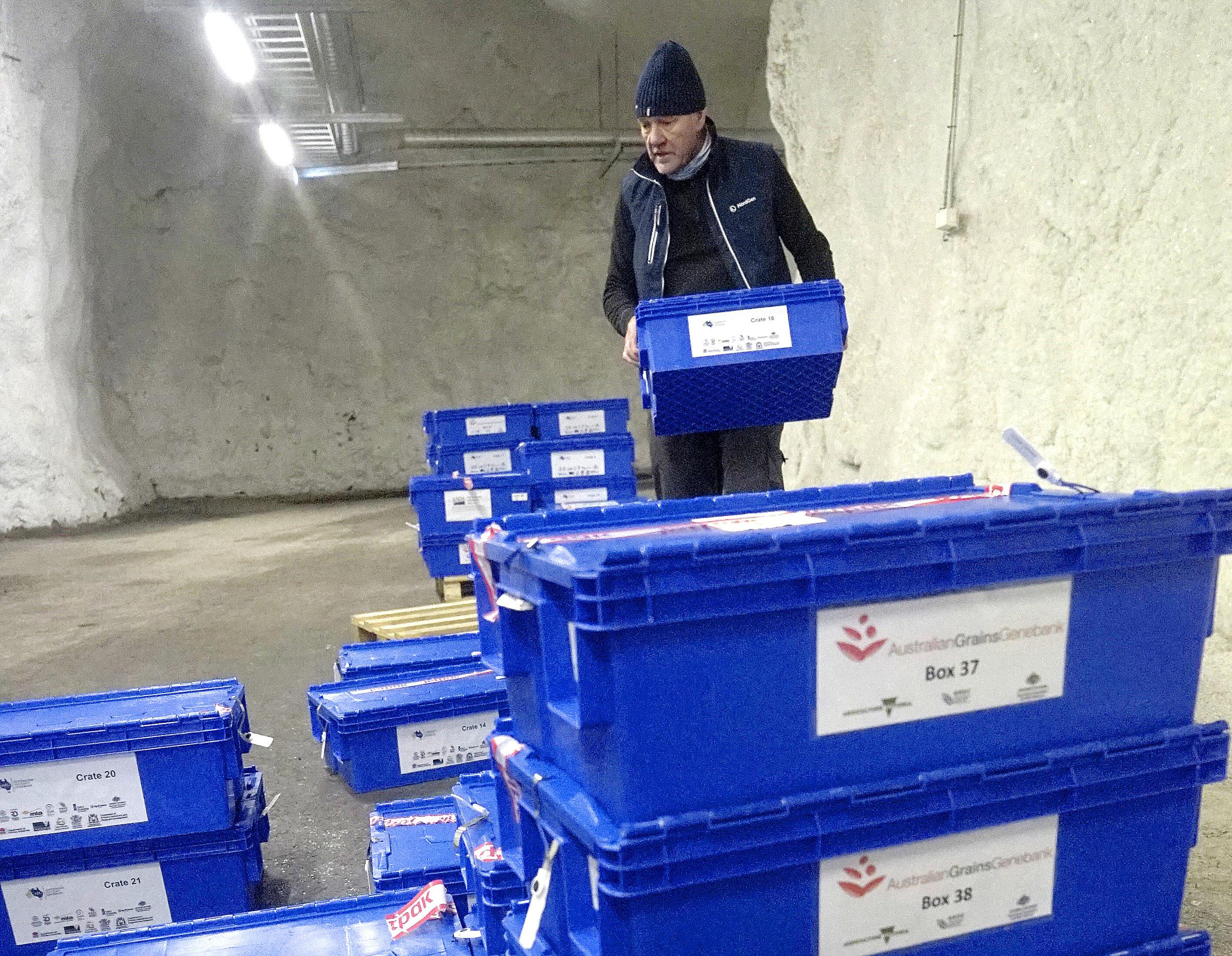 Åsmund Asdal helps transport seeds for storage in the Svalbard Global Seed Vault. (Photo: Nordgen)