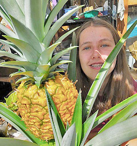 艾米总是鼓励她的目光集中在白的口袋里!这个水果是去年秋天的番茄,而她的学生在研究。