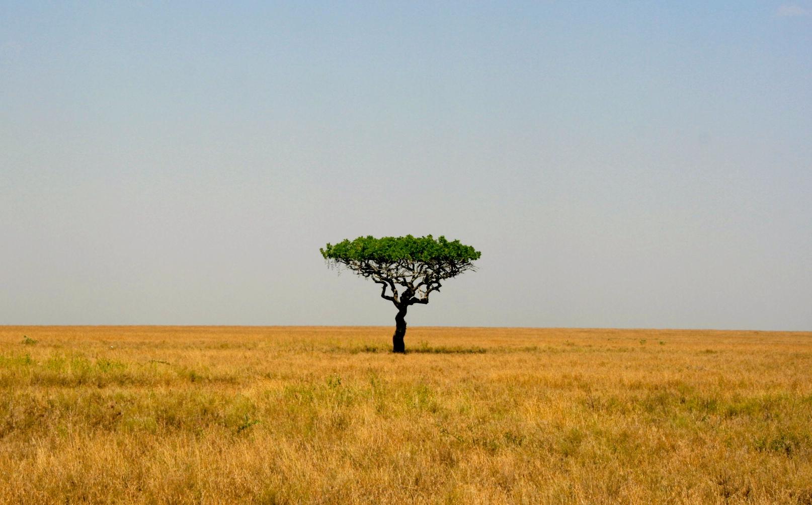 Africa 973.JPG