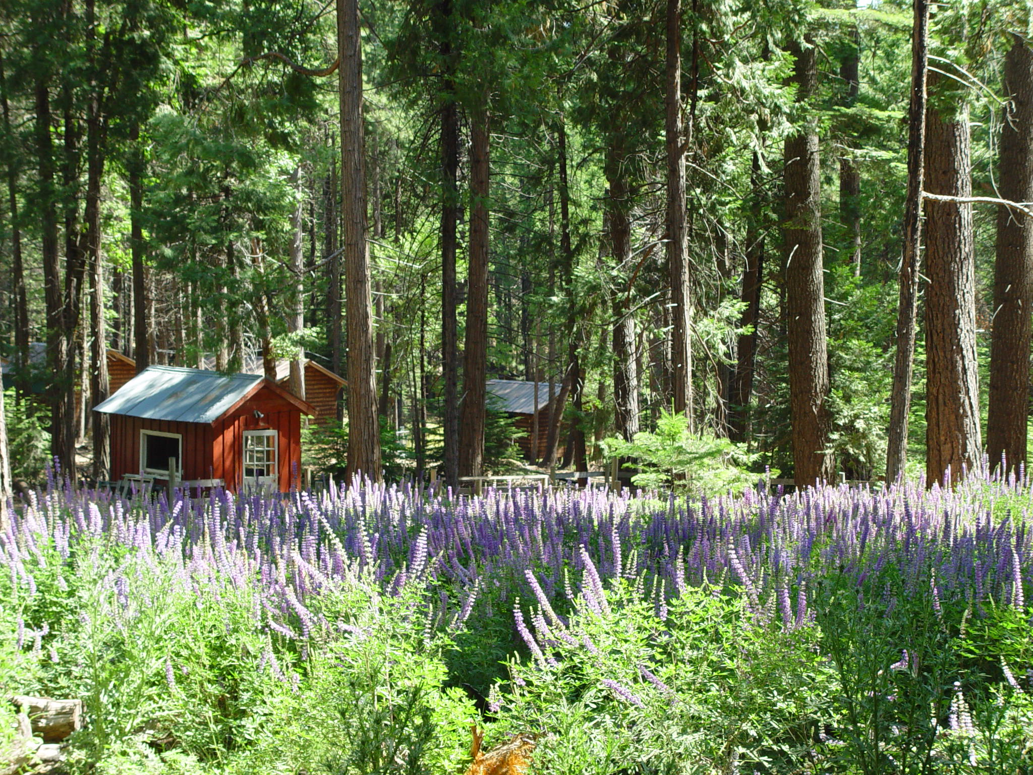 purple flowers barn.JPG