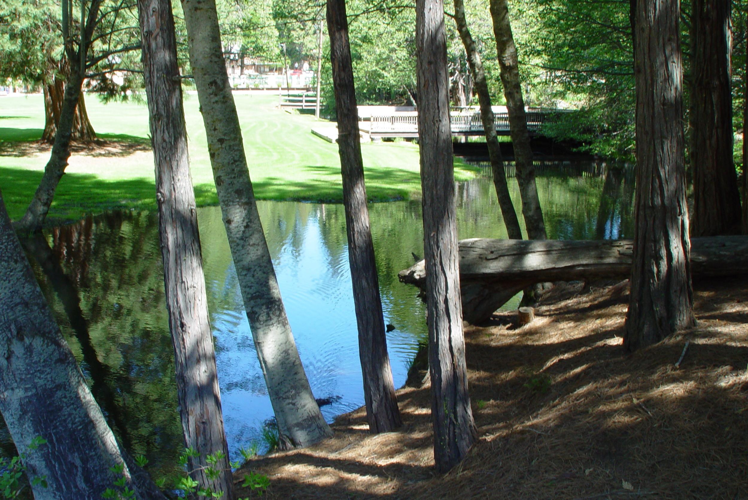 water thru trees.JPG