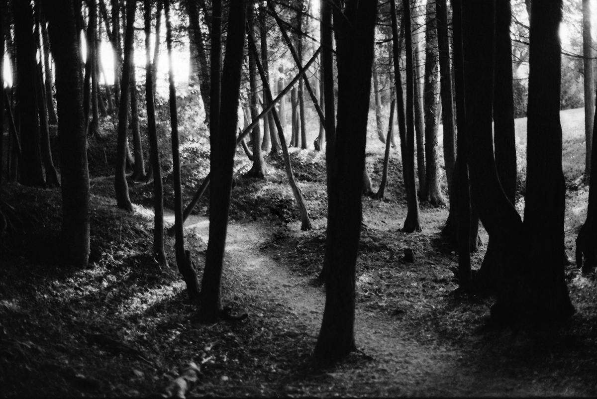 mackinacwoods.jpg