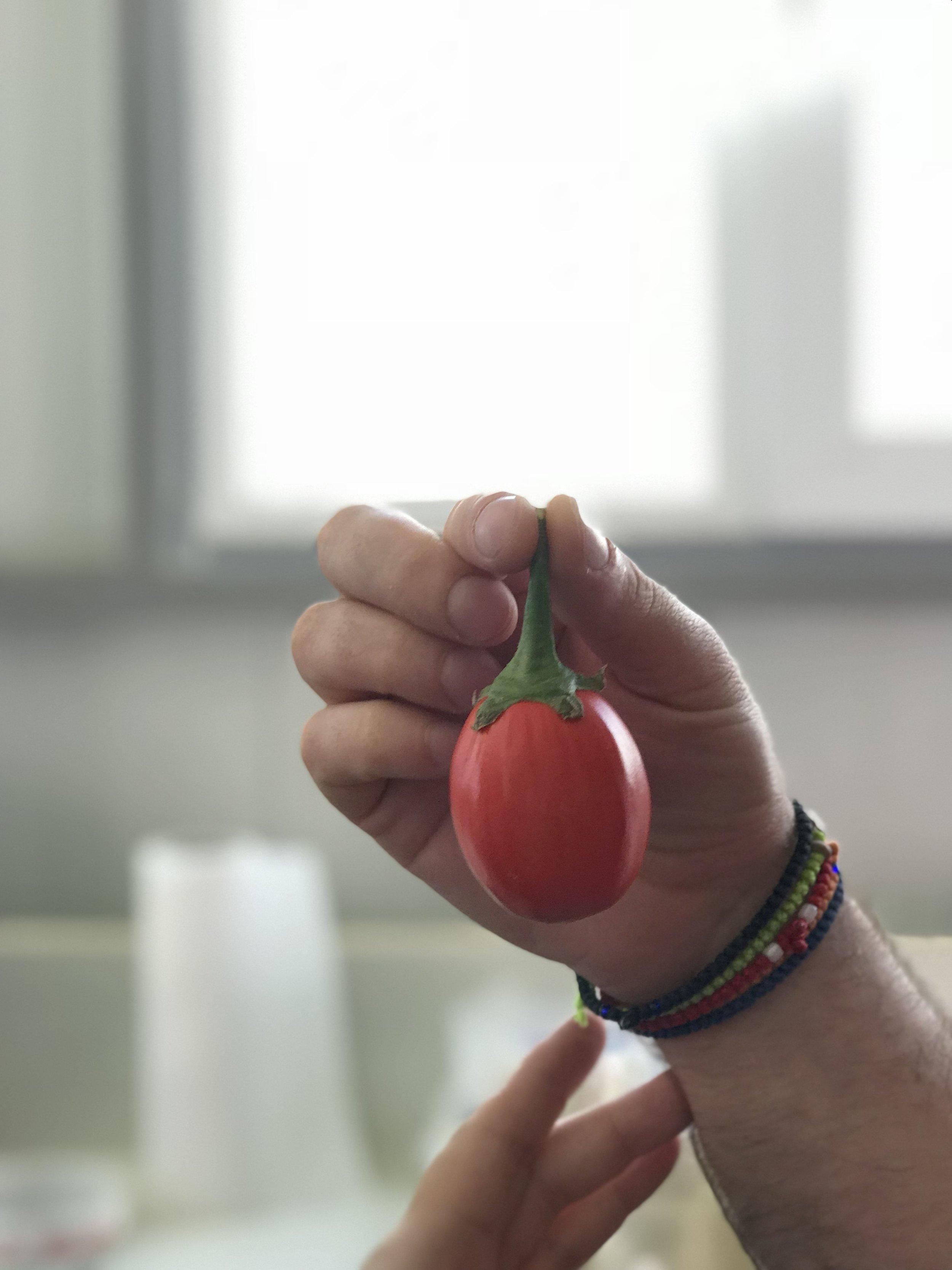 Μελιτζανάκι - Βιολογική Φάρμα Καραλάκη