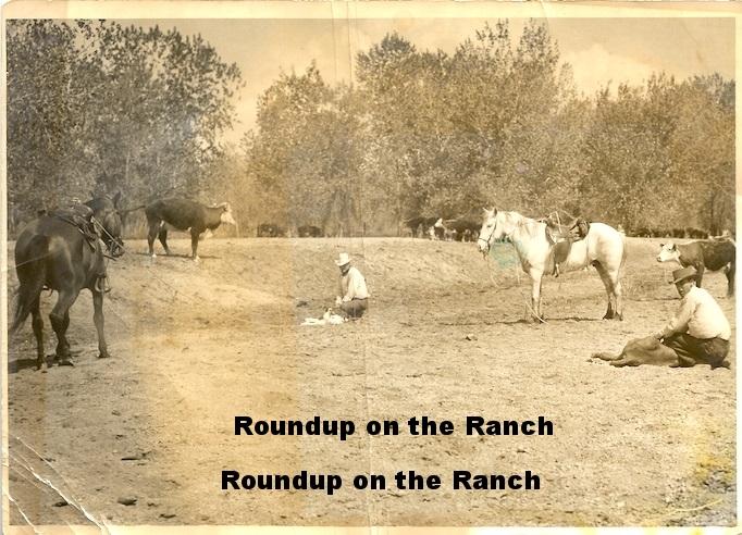 Roundup brand.jpg
