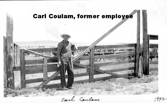 Carl with cattle.jpg