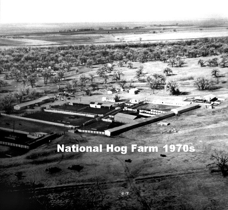 Hog Farm in the 70s.jpg