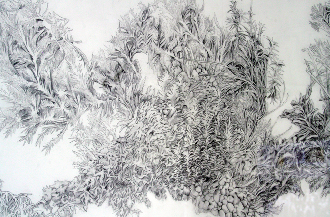 Jacqueline Brown: Pine Family 1 (detail), pencil on paper, 2009