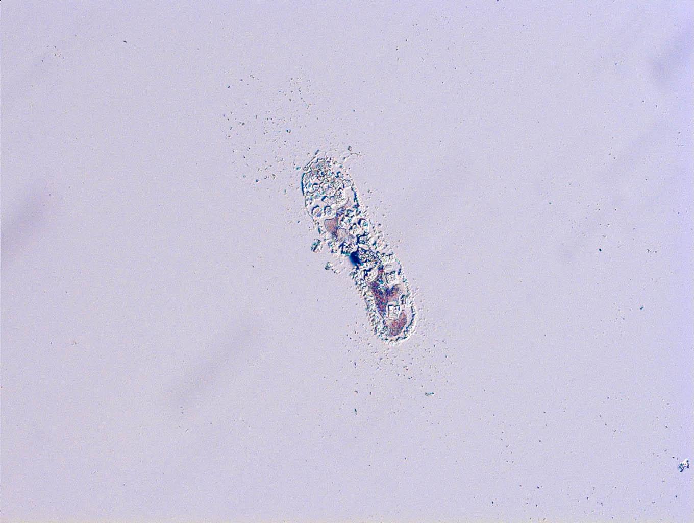 Plankton-7.jpg
