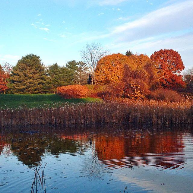 A very Maine scene... #maine #autumn #fall #leaves #foliage #newengland