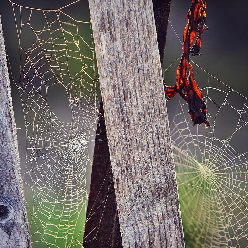 webs-01a.jpg