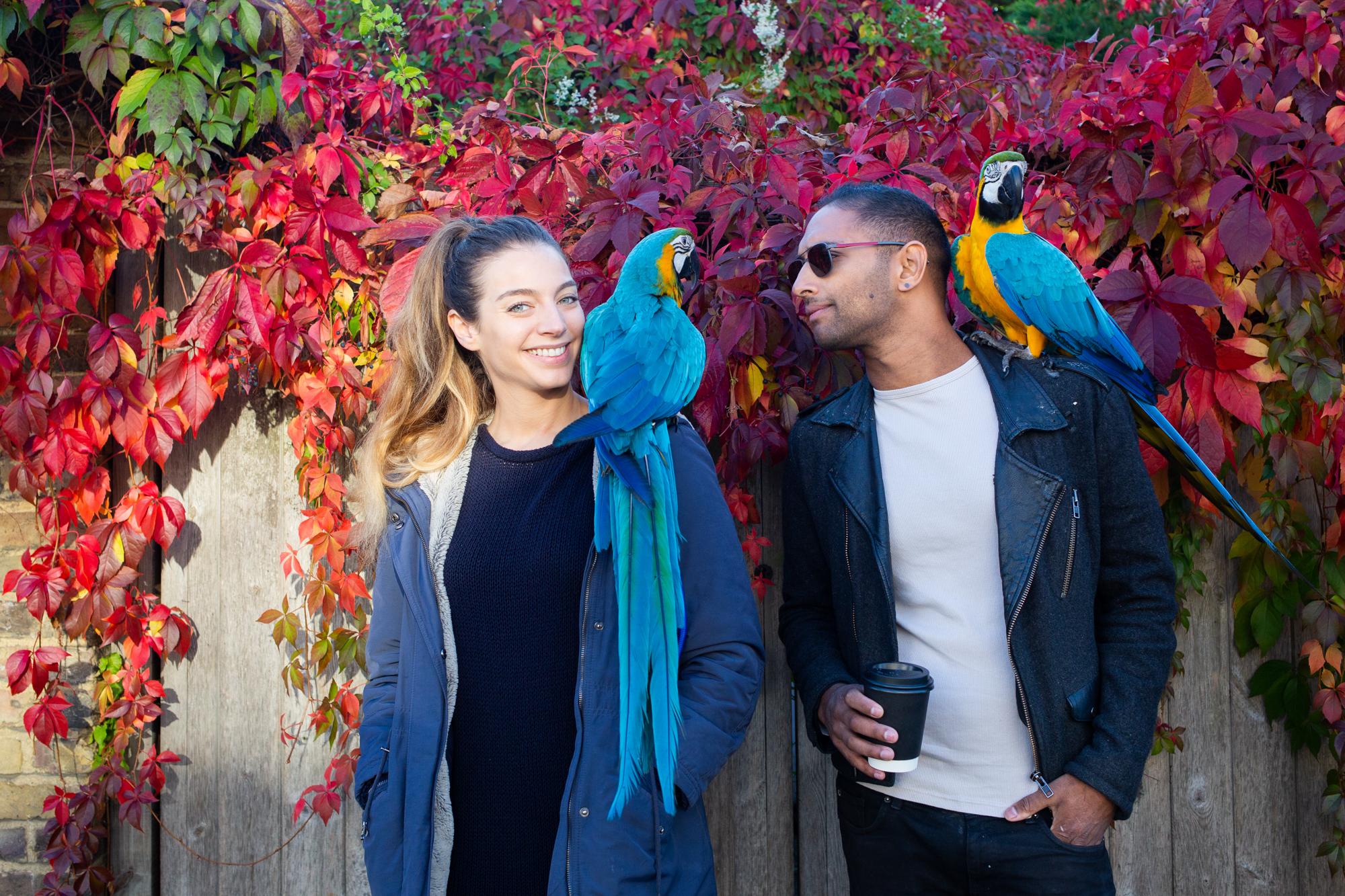 Macaws-16.jpg