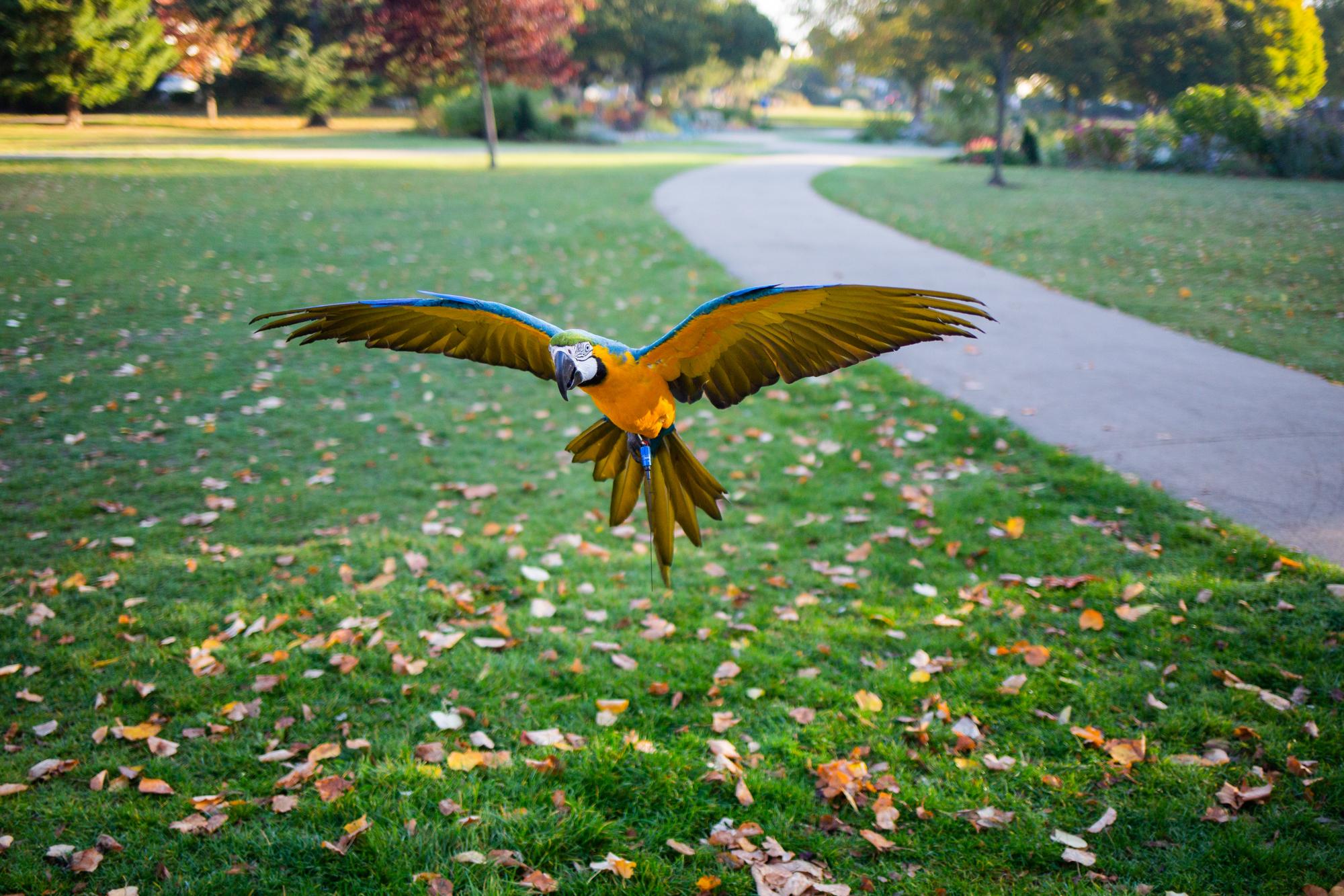 Macaws-13.jpg