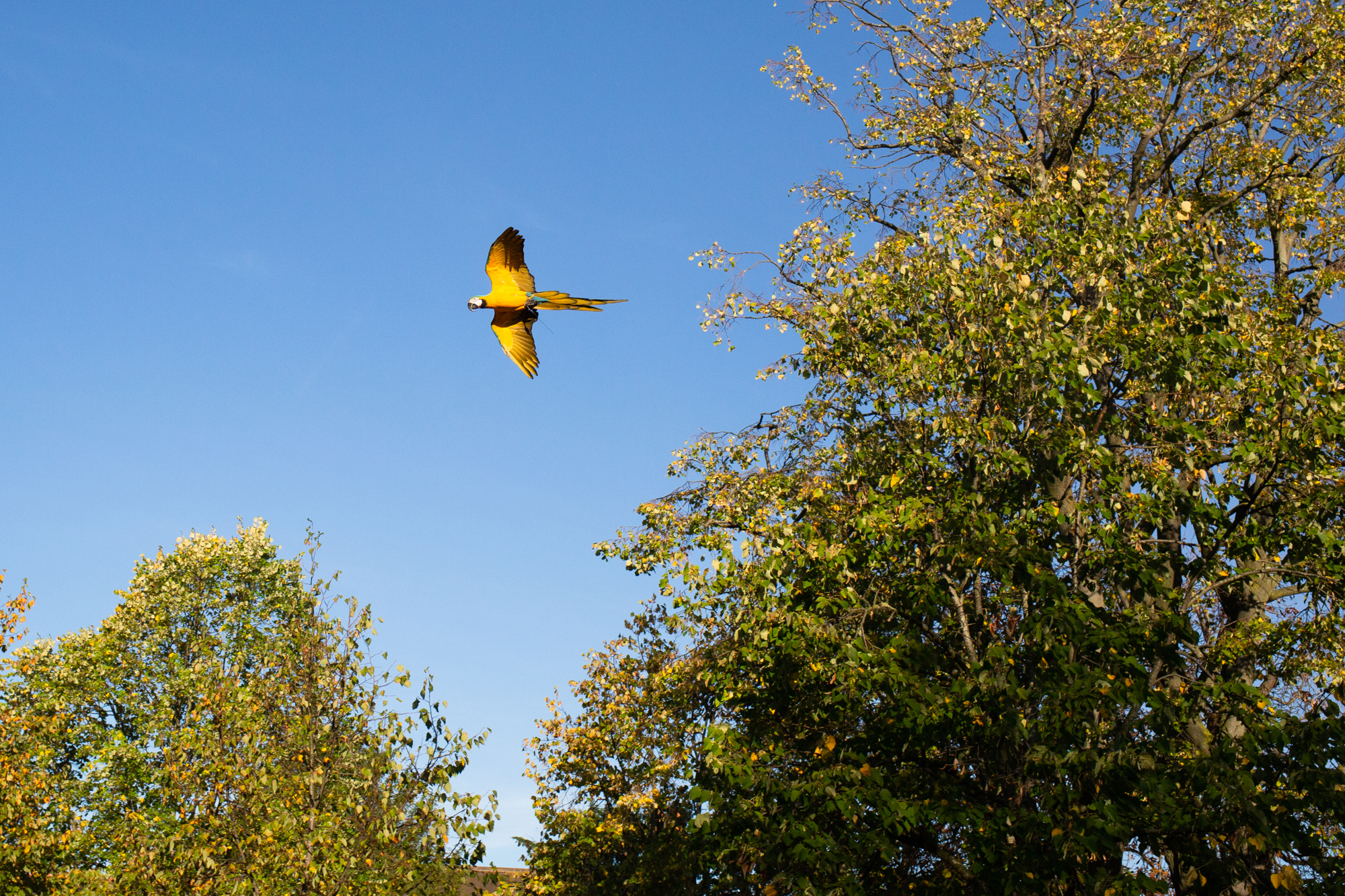 Macaws-14.jpg