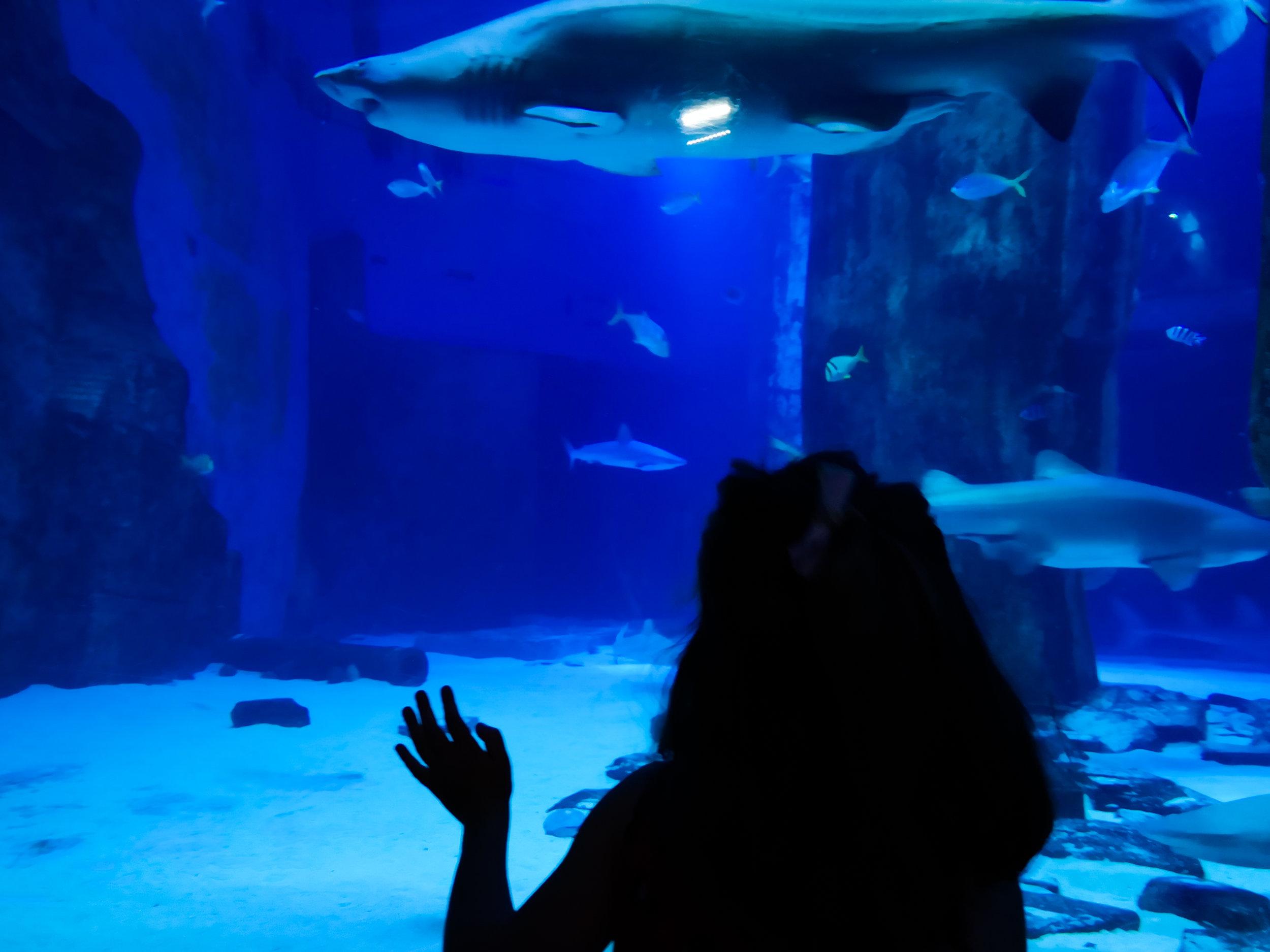 Sea_Life-2.jpg