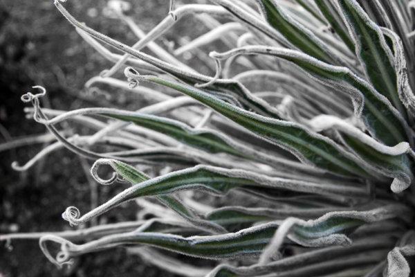 anemone 2009.jpg