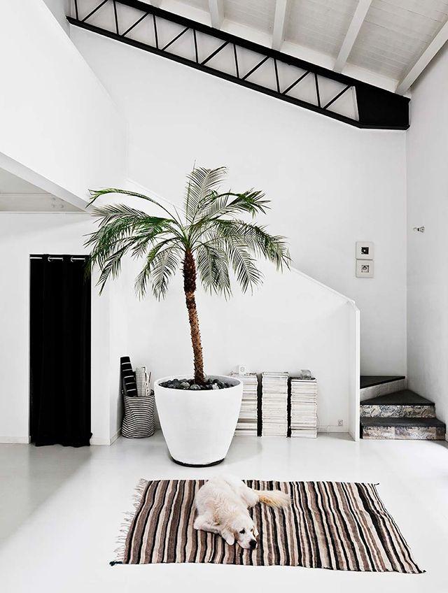 minimal  luxe lipbalm paradis 1 beach boho.jpg