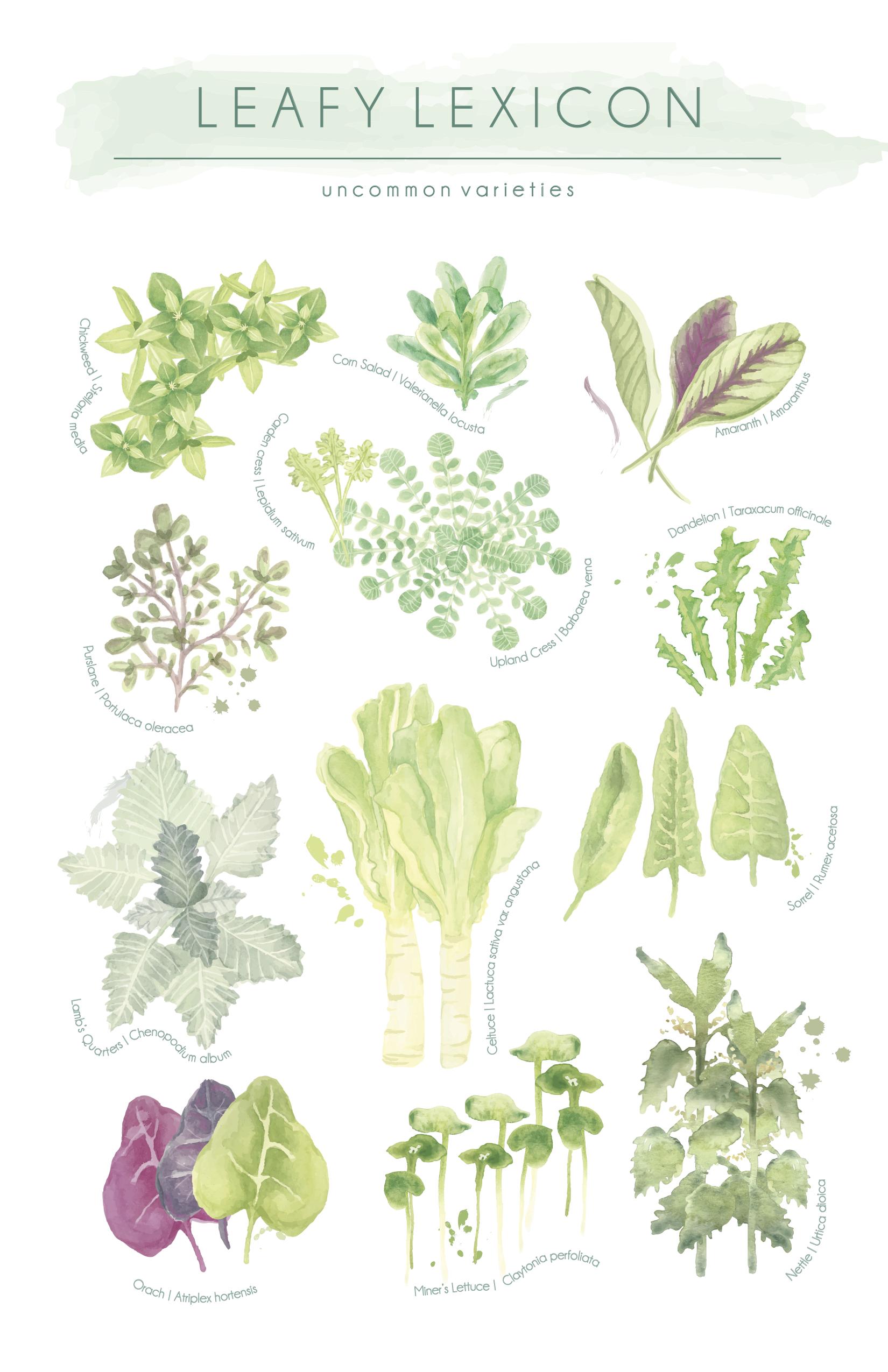 Leafy Lexicon
