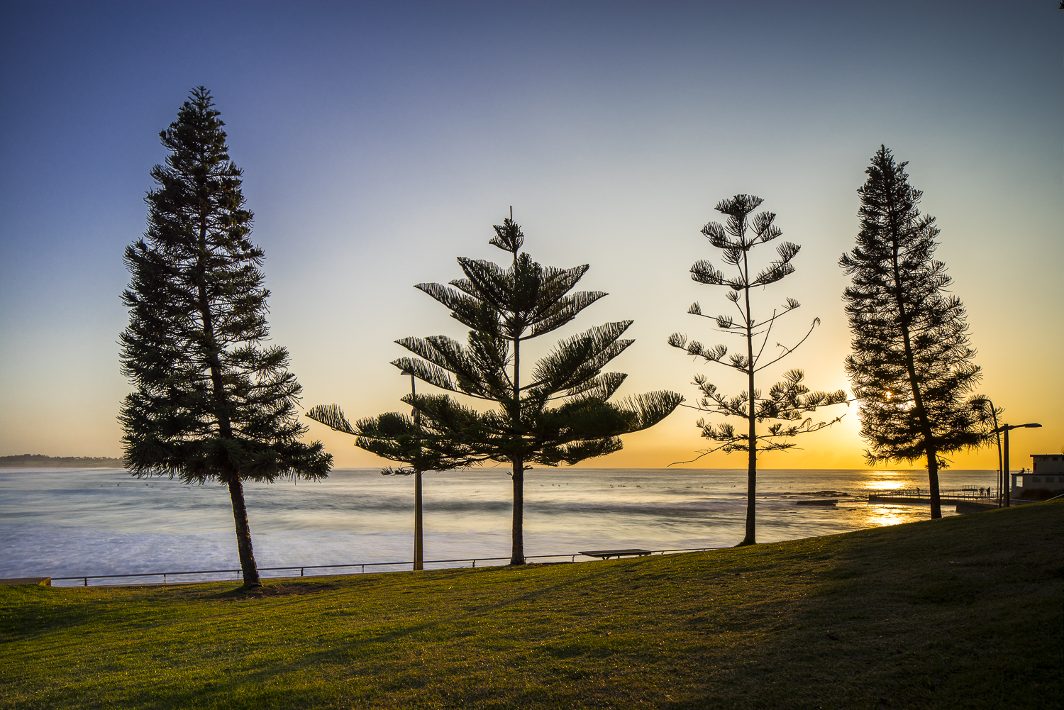 Dee Why Pines