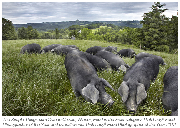 Pink Lady Food in the Field Jean Cazals Black Pigs